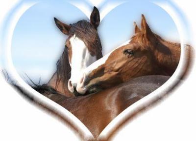 صور خيول رائعه 8r15o2d7