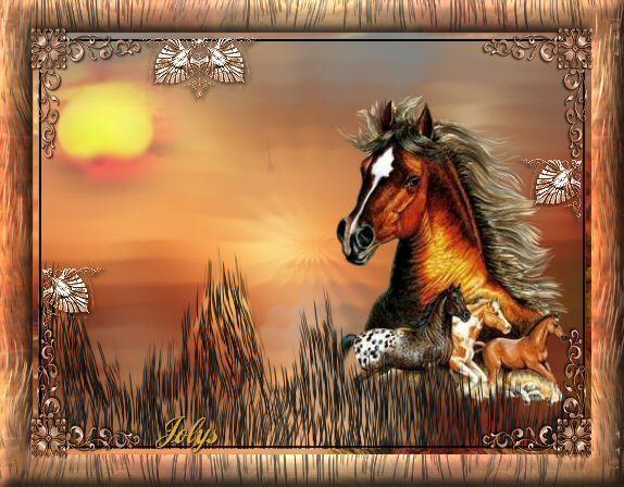 صور خيول رائعه U90jojsr